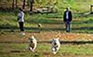 Yappy Hour at the Dog Park