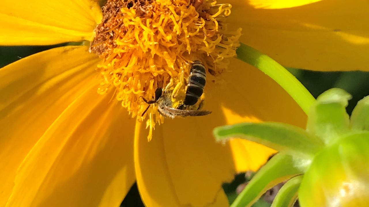 grants, pollinator, flower, lawns to legumes