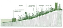 Shoreline Restoration Crossection